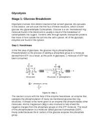 Glycolysis: How we break down glucose for energy