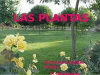 LAS PLANTAS Y SU BIOLOGIA