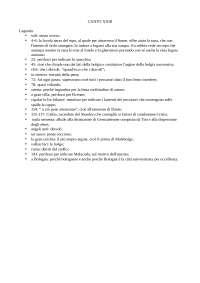 Appunti della lezione del docente Bellomo Saverio riguardo al XXIII canto dell'Inferno della Divina Commedia di Dante Alighieri per esame di Introduzione a Dante