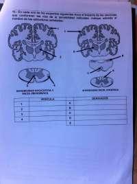 examen primer parcial anatomia II