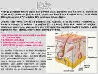 Gradja koze histologija