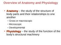 ANATOMY, THE STUDY OF HUHEIR FUNCTIONSMAN BODY IN RELATION TO T