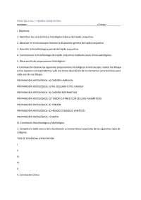 Tejido conjuntivo histológico , Guías, Proyectos, Investigaciones de Histología