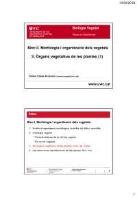 3. Els òrgans vegetatius de les plantes [1]. Presentació