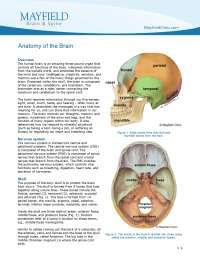 central nervous system-basics
