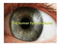 The Human Eye PowerPoint.pptx