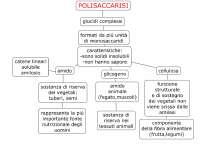 Mappa concettuale polisaccaridi