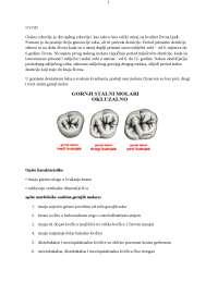 Gornji stalni molari