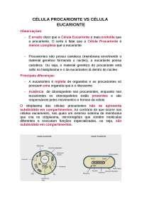 Célula Procarionte e Eucarionte  - Principais Diferenças