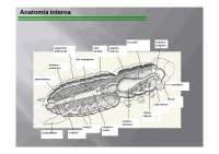 Tutta l'anatomia degli insietti