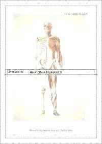 Resumo para o  Exame teórico de Anatomia Humana 2