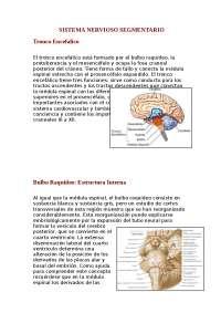 Sistema Nervioso Segmentario & Supra Segmentario
