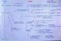 Schemi circolazione arteriosa, Anastasi
