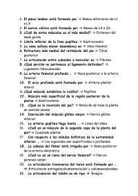 2º examen parcial Anatomia I, Ejercicios de Anatomía