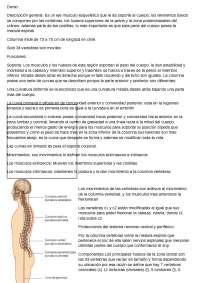 dorso anatomia humana de La UCsm
