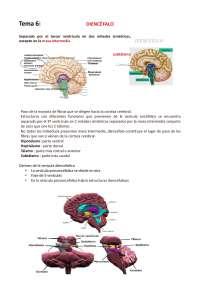 sistrma nervioso central