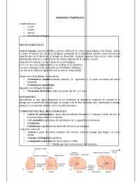 Aparato faríngeo. Embriología., Resúmenes de Biología Humana