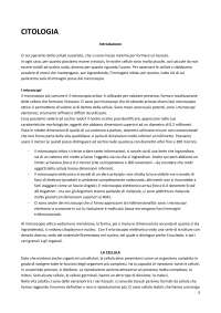Appunti Morfologia umana