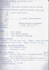 Biomeccanica fondamenti