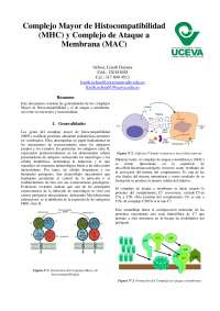 Complejo Mayor de Histocompatibilidad (MHC) y Complejo de Ataque a Membrana (MAC)
