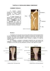 osteologia dos animais