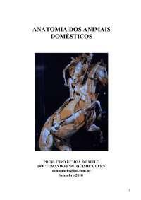Apostila de Anatomia Osteologia