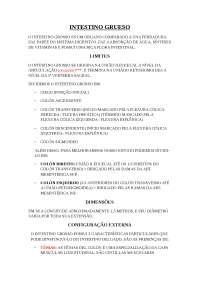Resumen Abdomén III baseado en lo Rouviere