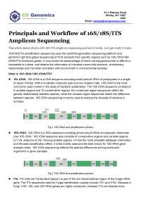 Principals and Workflow of 16S/18S/ITS Amplicon Sequencing