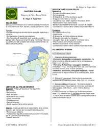 Medicina pelvis osea