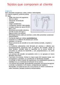 tejidos que componen al diente