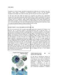 Virus VIH, ciclo de replicación y caracteristicas morfológicas estructurales y genómicos