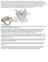 Anatomia della pelvi