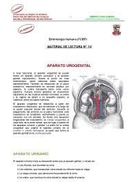 Aparato urogenital embriología