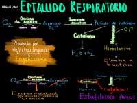 Proceso del estallido respiratorio. Esquema de inmunología.