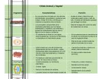 Tabla celula animal y vegetal