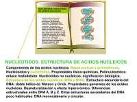 nucleotidos y dna (primer cuatri)