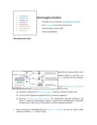 aminoglucósidos resumen