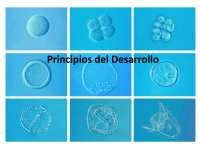 principios del desarrollo