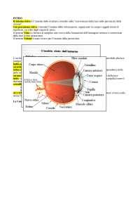 introduzione al sistema visivo