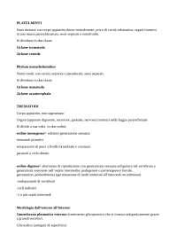 caratteristiche generali platelmini classe trematodi