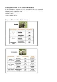 appunti di strongilosi gastro intestinale nei bovini