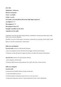parassitologia animale, le zecche