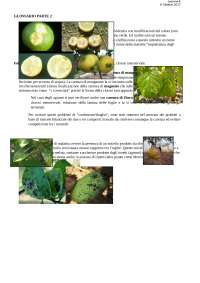 Glossario sintomatologico 2