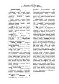 43. Американский клеверный минер Liriomyza trifolii