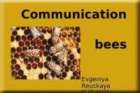 Танцы пчёл, как способ коммуникации