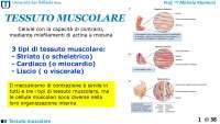 Tessuto muscolare per scienze motorie
