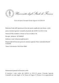 Relazione tirocinio università