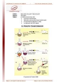 REPLICACION DEL ADN -TRANSCRIPCIO Y TRANSDUCCION