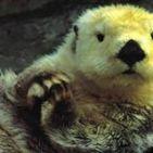 o-lontra-concurseiro