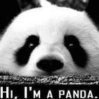 xein-is-a-panda